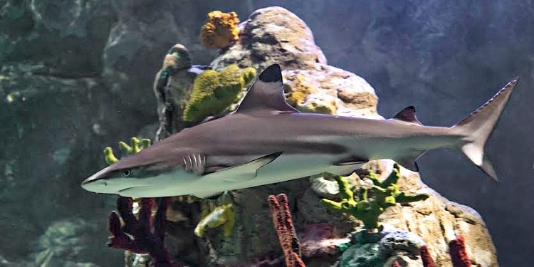 Scarborough Sea Life Centre Reef Sharks